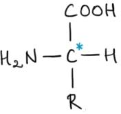 aminoacid gen.jpg