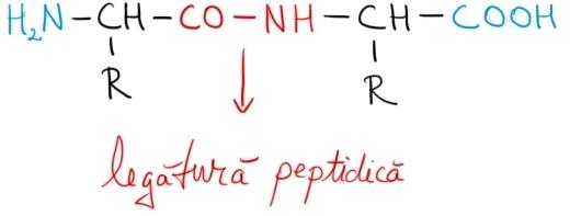 legatura peptidica.jpg